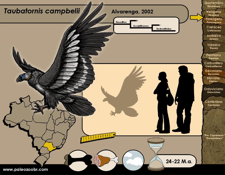 Taubatornis campbelli