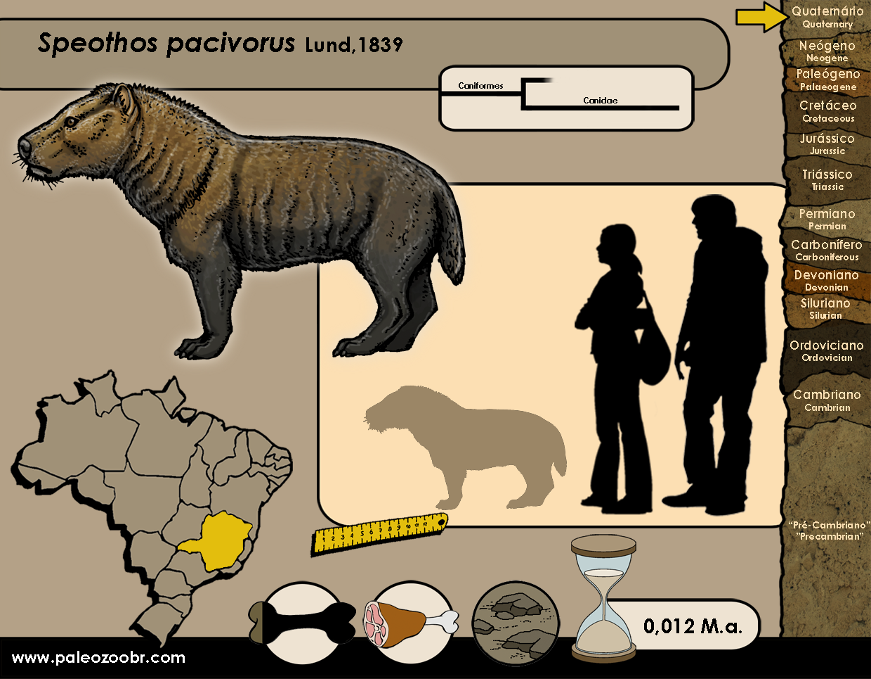 Speothos pacivorus