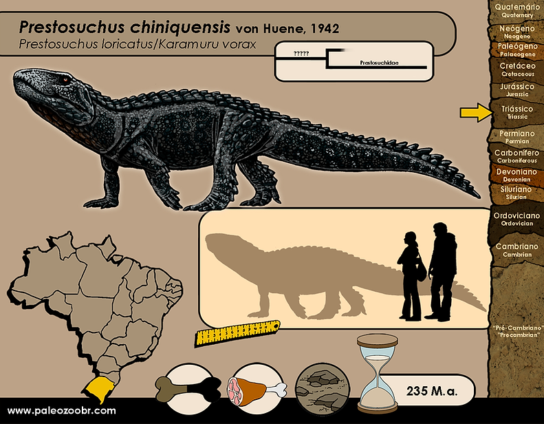 Prestosuchus chiniquensis.png
