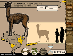 Paleolama major