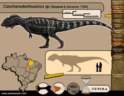 Carcharodontosaurus sp