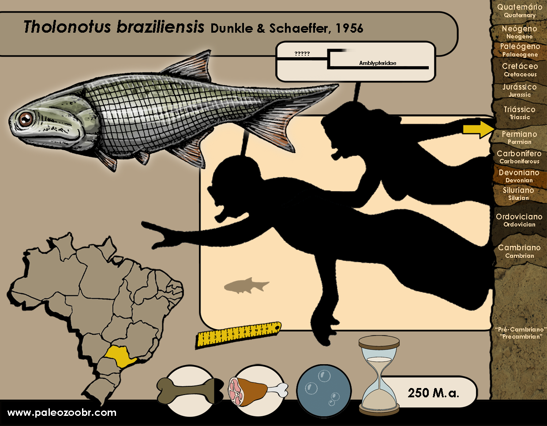 Tholonotus braziliensis