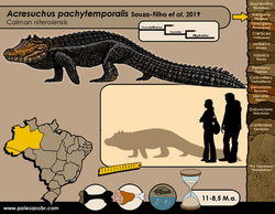 Acresuchus pachytemporalis