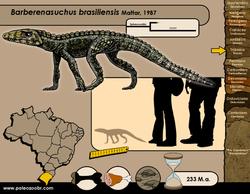 Barberenasuchus brasiliensis