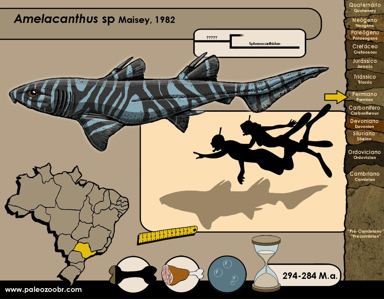 Amelacanthus sp