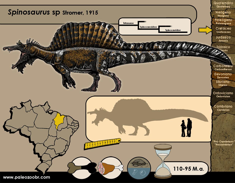 Spinosaurus sp