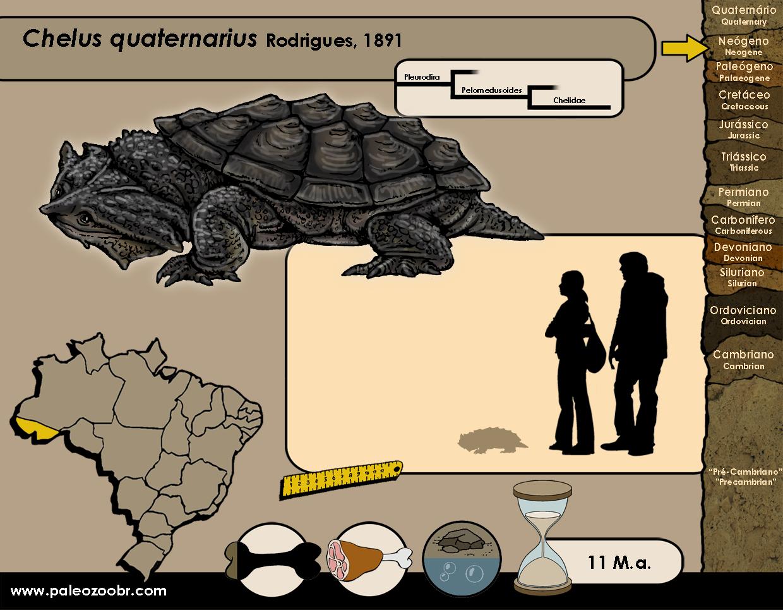 Chelus quaternarius