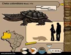 Chelus colombiana