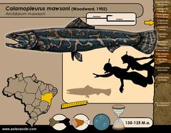 Calamopleurus mawsoni