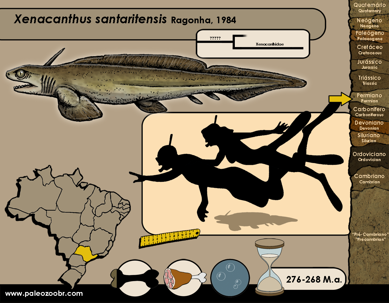 Xenacanthus  santaritensis