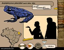 Arariphrynus placidoi