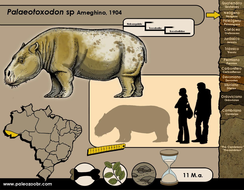Palaeotoxodon sp