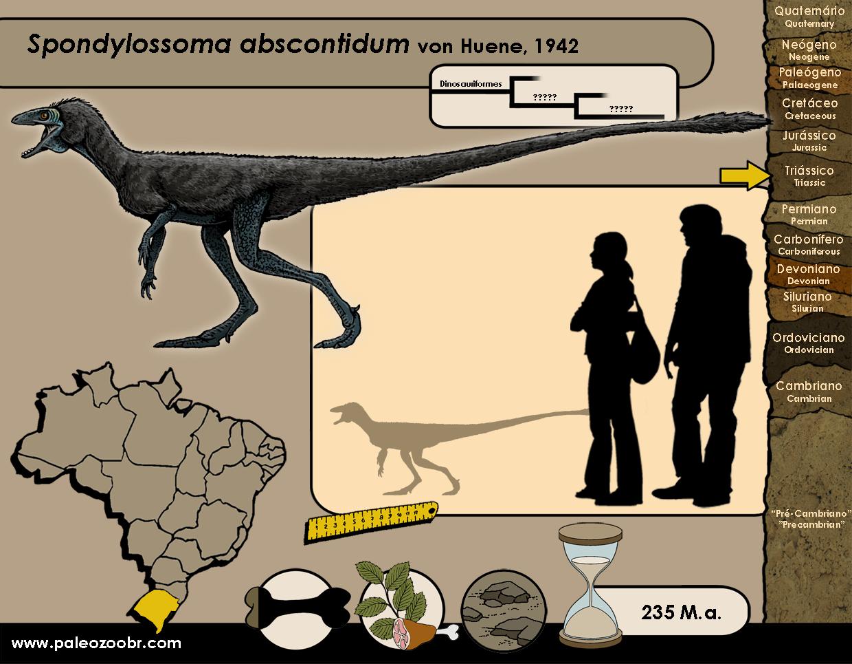 Spondylossoma abscontidum