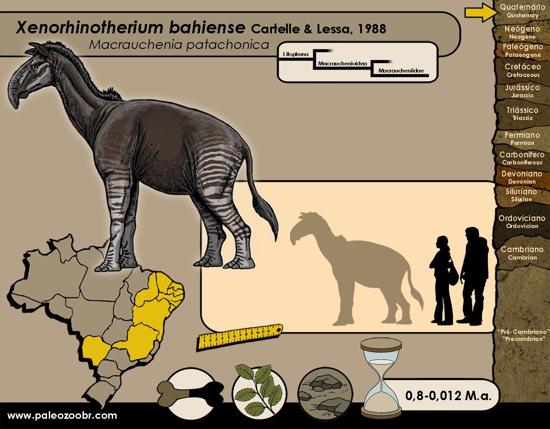 Xenorhinotherium bahiense