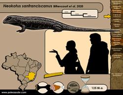 Neokotus sanfranciscanus