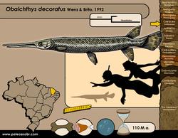 Obaichthys decoratus
