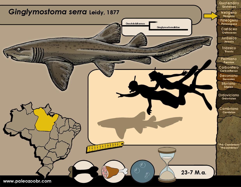 Ginglymostoma serra
