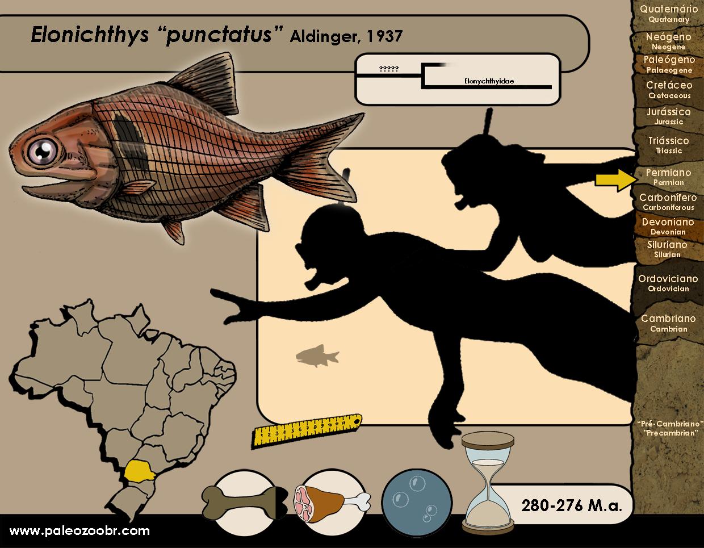 Elonichthys puctatus