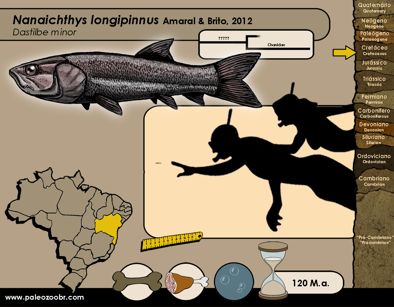 Nanaichthys longipinnus