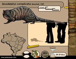 Zeusdeldphys complicatus