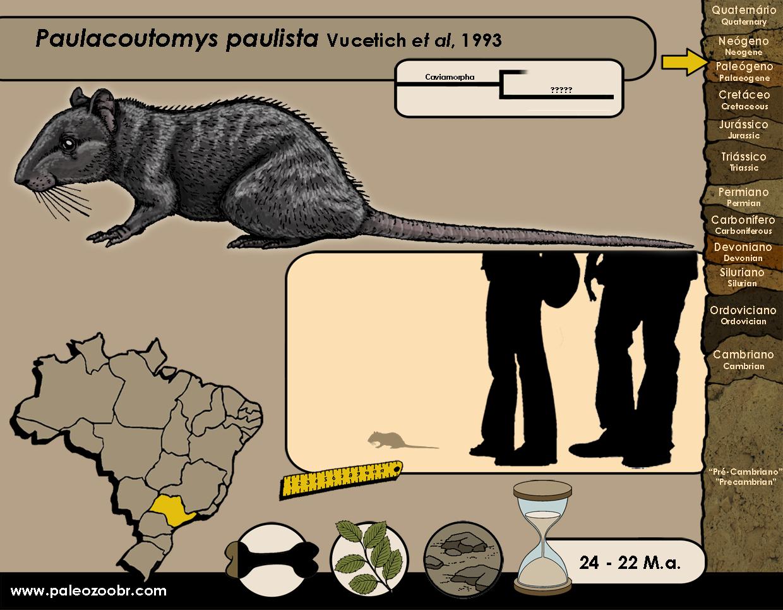 Paulacoutomys paulista