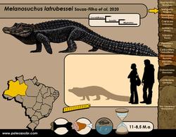 Melanosuchus latrubessei