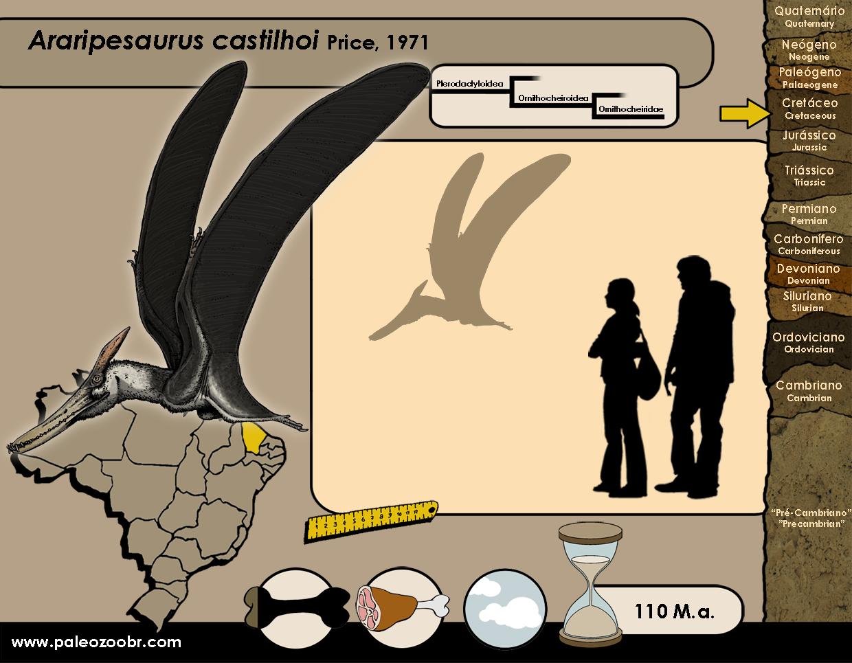 Araripesaurus castilhoi