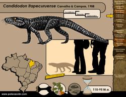 Candidodon itapecuruense