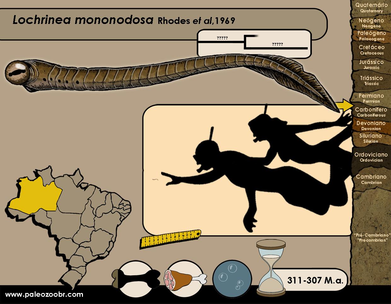 Lochriea mononodosa