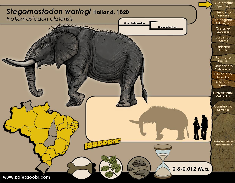 Stegomastodon waringi