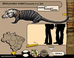 Minicynodon maieri