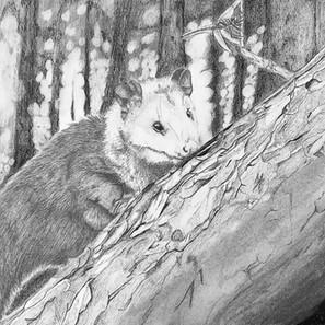 """30 - Marcos Víctor Gomes Barreto """"Brasilestes à espreita."""" (Grafite e carvão) Em um pequeno bosque, um pequeno exemplar de Brasilestes Stardusti está à caça de um inseto."""