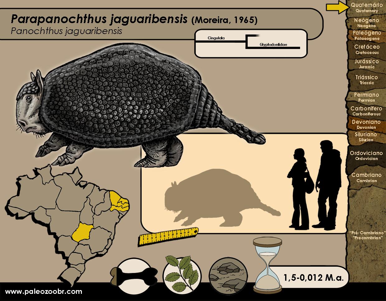 Parapanochthus jaguaribensis