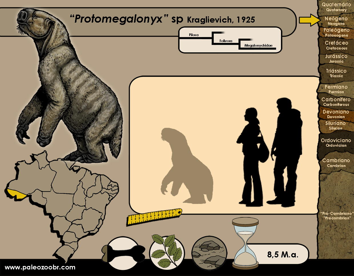 Protomegalonyx sp