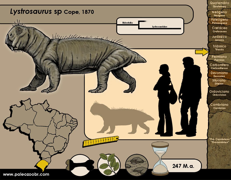 Lystrosaurus sp