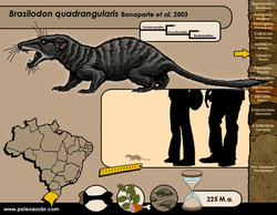 Brasilodon quadrangularis