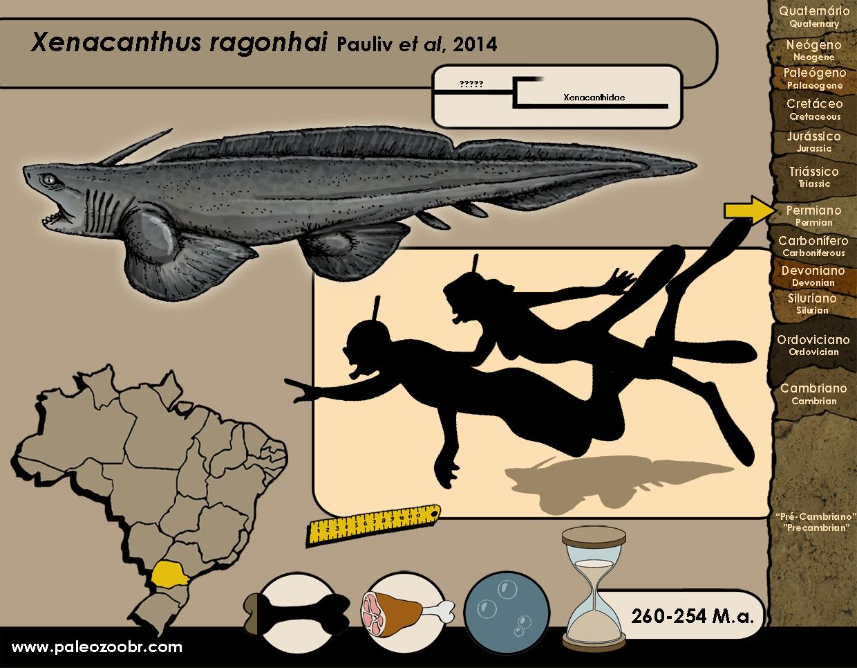 Xenacanthus ragonhai