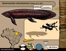 Equinoxiodus alcantarensis