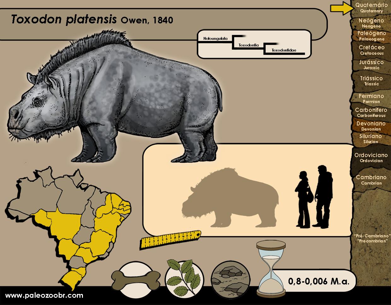 Toxodon platensis