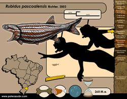 Rubidus pascoalensis