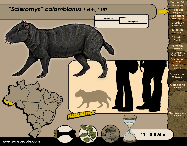 Scleromys colombianus