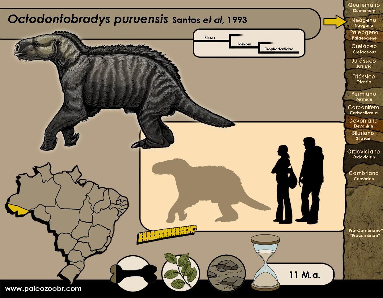 Octodontobradys puruensis