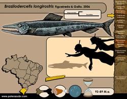 Brazilodercetis longirostris