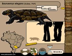 Bauruemys elegans