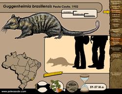 Guggenheimia brasiliensis