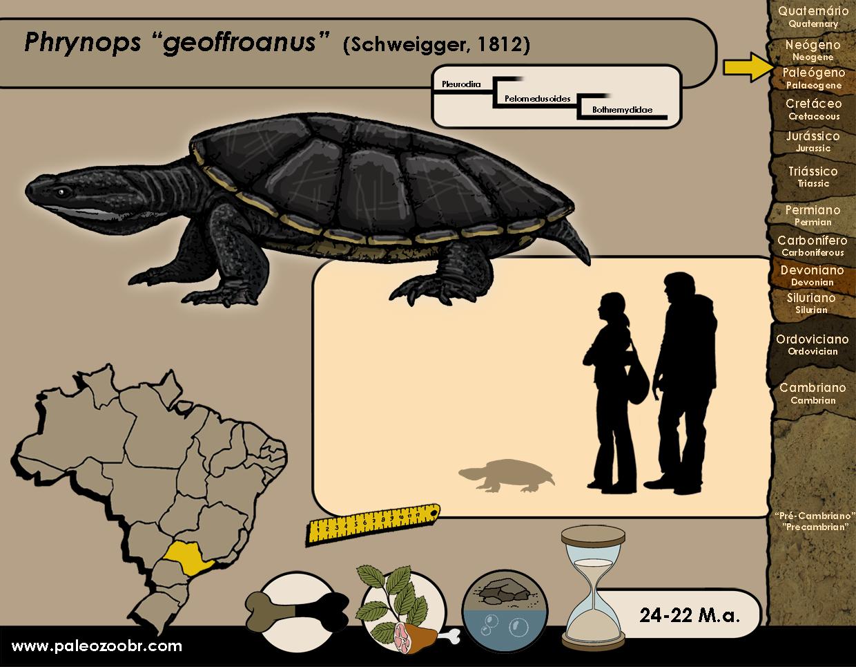 Phrynops geoffroanus
