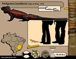 Pristiguana brasiliensis