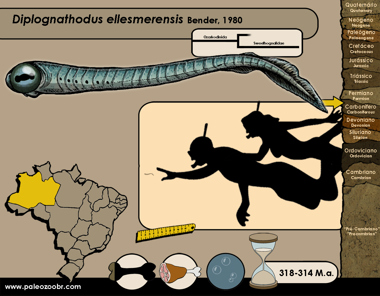 Diplognathodus ellesmerensis