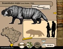 Exaeretodon major