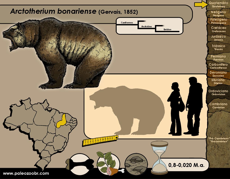 Arctotherium bonariense